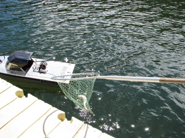 RC boat catch